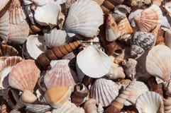 Diverse havsskal arkivbilder