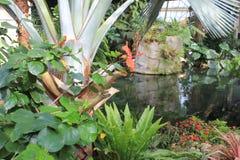 Diverse installaties in de serre van Parc Phoenix in Nice stock afbeeldingen