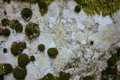 Diverse kleuren van korstmos en mos op steenachtergrond stock fotografie