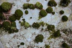 Diverse kleuren van korstmos en mos op steenachtergrond royalty-vrije stock foto's