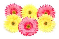 Diverse kleurrijke bloemen royalty-vrije stock afbeelding