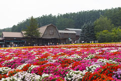 Diverse kleurrijke bloemengebieden bij Tomita-Landbouwbedrijf, Furano, Hokkaido Stock Foto