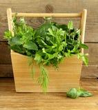 Diverse kruiden (basilicum, thyme, peterselie, munt en dille) Stock Foto's