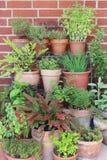 Diverse kruiden in potten stock foto