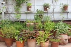Diverse kruiden in potten stock fotografie