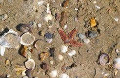 Diverse lege overzeese shells en zeester op zand in het Overzees van Marmara Royalty-vrije Stock Foto's