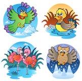 Diverse leuke vogels 1 royalty-vrije illustratie