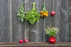 Diverse medische kruiden en appel op de muur van de landbouwbedrijfschuur stock afbeeldingen