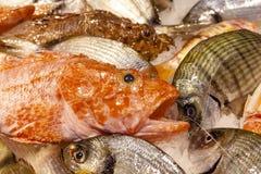 Diverse mun för fisköga arkivbild