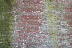 Diverse older red brick wall with green moss Stock Photos