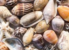 Diverse overzeese shells achtergrond Kleine shells close-up Overzeese shell bannermalplaatje Royalty-vrije Stock Afbeeldingen