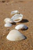 Diverse Overzeese Shells Inzameling op Zandachtergrond Royalty-vrije Stock Afbeelding