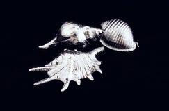 Diverse overzeese shells zilveren kleur Stock Afbeelding