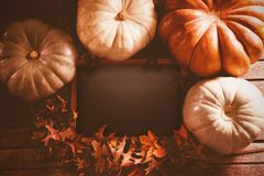 Diverse pumpkin surround black screen and leaf Stock Image