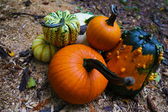 Diverse Pumpkins at the field Stock Image