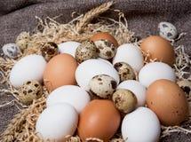 diverse rå ägg arkivfoto