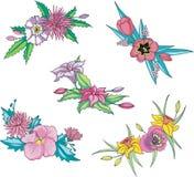 Diverse rosa blommor för prydnadar Royaltyfri Fotografi