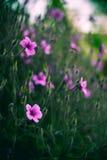 Diverse roze achtergrond van het bloemengebied Stock Foto