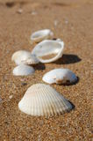 Diverse Sea Shells Collection on Sand Background Royalty Free Stock Image