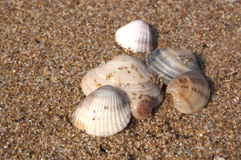 Diverse Sea Shells Collection on Sand Background. On the Beach royalty free stock image