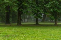 Diverse selectie van bomen en het lopen weg in de ochtendmist royalty-vrije stock foto's