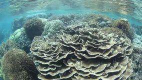 Diverse, Shallow Coral Reef stock video footage