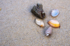 Diverse shells op strand Stock Afbeelding
