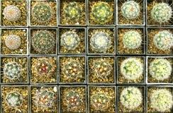 Diverse soorten cactussen Royalty-vrije Stock Afbeeldingen