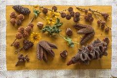 Diverse soorten kegels van over de hele wereld op een beige doek Royalty-vrije Stock Fotografie