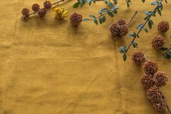 Diverse soorten kegels van over de hele wereld op een beige doek met ruimte voor inschrijving Royalty-vrije Stock Afbeelding