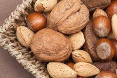 Diverse soorten noten Royalty-vrije Stock Afbeelding