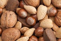 Diverse soorten noten in shells Royalty-vrije Stock Foto's