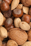 Diverse soorten noten in shells Royalty-vrije Stock Afbeelding