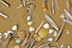 Diverse Tweekleppige schelpdieren en Shells op een Strand in Normandië, Frankrijk royalty-vrije stock foto