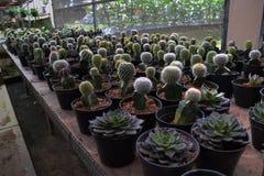 Diverse types van cactus Royalty-vrije Stock Foto
