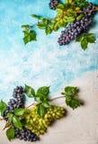 Diverse types van druiven met bladeren Stock Afbeeldingen