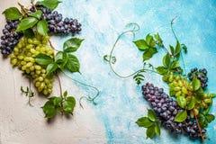 Diverse types van druiven met bladeren Royalty-vrije Stock Afbeeldingen