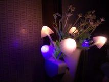 Diverse verlichtingskleur van de paddestoelbloem van de nachtlamp Het donkere omringen De ruimte van het exemplaar stock foto's