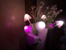Diverse verlichtingskleur van de paddestoelbloem van de nachtlamp Het donkere omringen De ruimte van het exemplaar stock foto