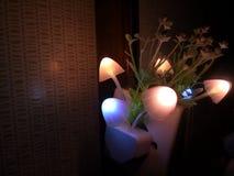 Diverse verlichtingskleur van de paddestoelbloem van de nachtlamp Het donkere omringen De ruimte van het exemplaar royalty-vrije stock fotografie