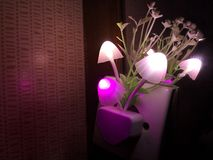 Diverse verlichtingskleur van de paddestoelbloem van de nachtlamp Het donkere omringen De ruimte van het exemplaar royalty-vrije stock afbeelding