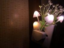 Diverse verlichtingskleur van de paddestoelbloem van de nachtlamp Het donkere omringen De ruimte van het exemplaar stock afbeeldingen