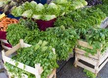 Diverse verse groene bladgroentenspinazie, munt, sla, koriander, dille bij een landbouwersmarkt stock foto's