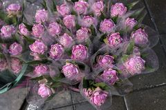 Diverse verse roze lotusbloem in de markt van de straatbloem, Bangkok, Thail royalty-vrije stock foto