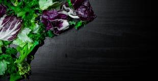 Diverse verse saladebladeren met sla, radicchio, en raket op donkere houten achtergrond met exemplaarruimte Royalty-vrije Stock Fotografie