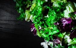 Diverse verse saladebladeren met sla, radicchio, en raket op donkere houten achtergrond met exemplaarruimte Royalty-vrije Stock Foto