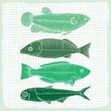 Diverse vormen van vissen Stock Foto