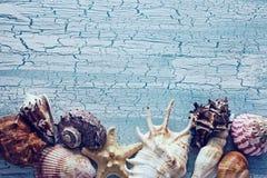 Diverse zeeschelpen die op lijst liggen Royalty-vrije Stock Fotografie