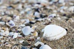 Diverse zeeschelpenachtergrond Shells op een zandig strand, de Zwarte Zee Stock Fotografie