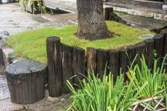 Diverses barrières à la racine de l'arbre dans la porte est de la vieille porte photographie stock libre de droits
